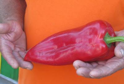 Zdrava, čista, lepa paprika, dušu dala za pečenje i ljuštenje